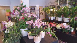 Notes blommor och Grycksbo handelsträdgård